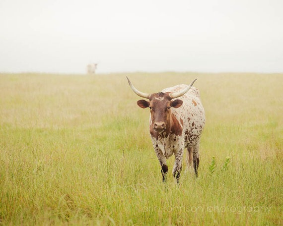Longhorn in Texas | Erin Johnson Photography